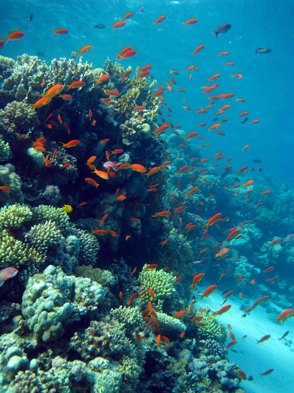 Smukt koralrev ved Eel Garden