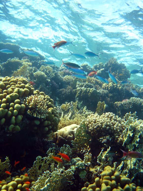 Fisk og koraller ved Eel Garden