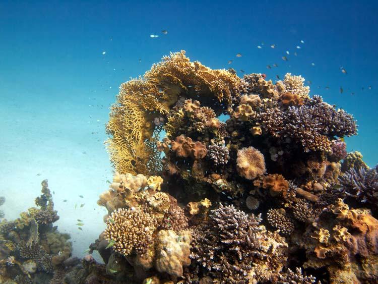 Koraller ved Abu Ghusum