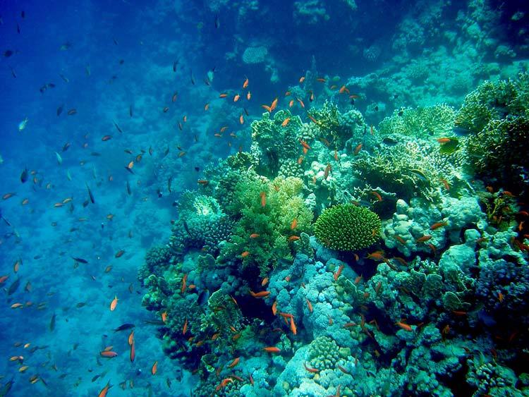 Paradise Reef i Sharm el Sheikh