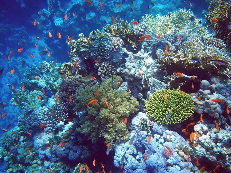 Smukt koralrev ved Sharm el Sheikh