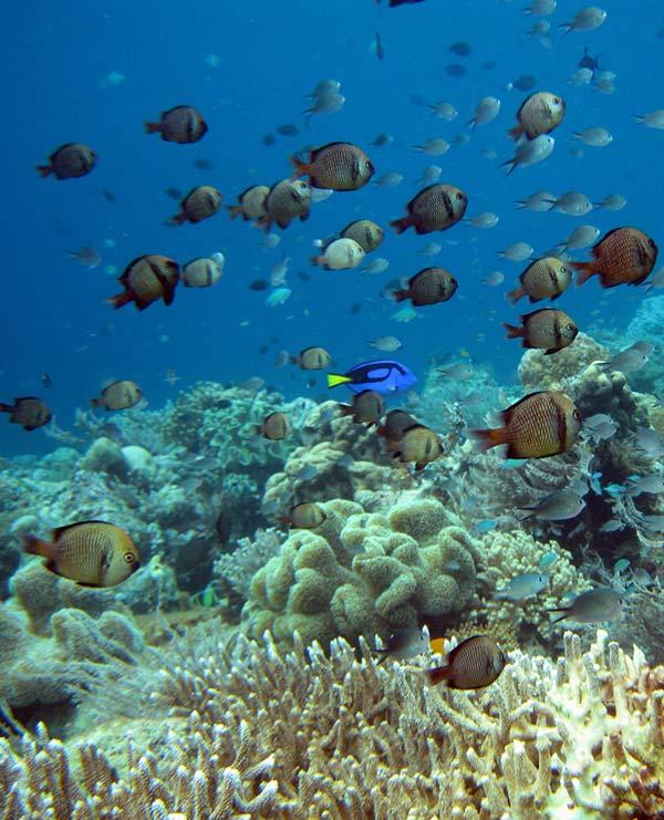 Fisk og koraller ved Wakatobi