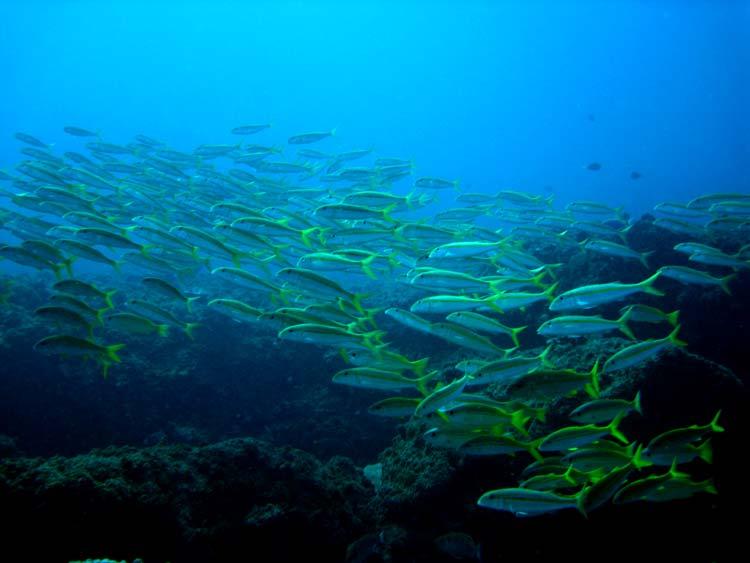 Flot stime fisk ved Croc Rock i Tofo
