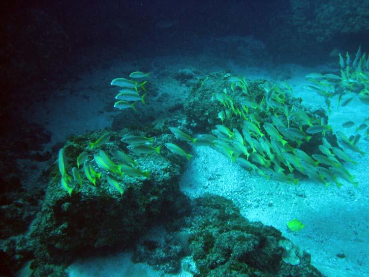 Stime af fisk i Tofo