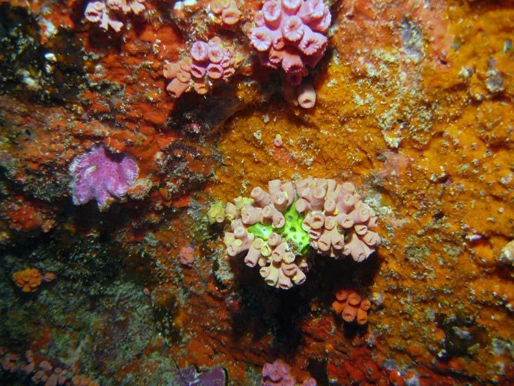 Smuk og farverig klippevæg ved Shark Point