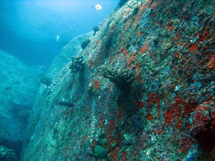 Klippevægge ved Shark Point