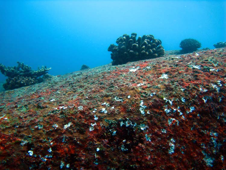 Koraller på klipper ved Shark Point