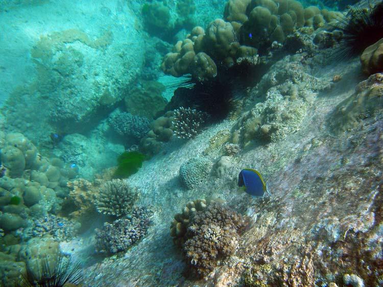 Koraller på granitvægge ved Anse Lazio