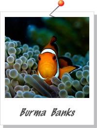 Burma Banks - Foto: divemecressi