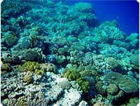 Hvem vil ikke gerne bevare sådanne koralhaver?