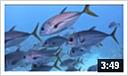 Dykning ved Exumas