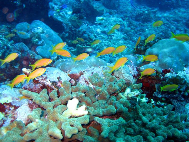 Koraller og fisk ved Leven Banks, Zanzibar